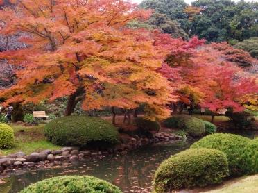 Tokyo'nun sonbaharı da güzel